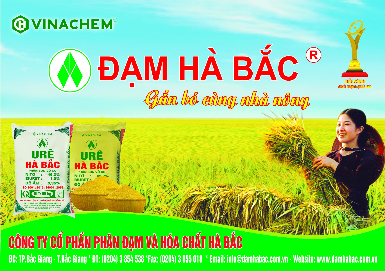 dam-ha-bac