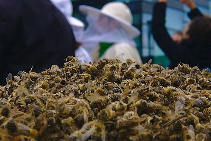bao dong hien trang moi truong brazil 500 trieu ong chet trong 3 thang