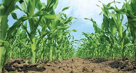 Syngenta dành 2 tỉ USD giúp ngành nông nghiệp ứng phó biến đổi khí hậu